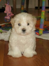 We think this might be a picture of the soon-to-be-ours puppy.  If not it looks a lot like her!