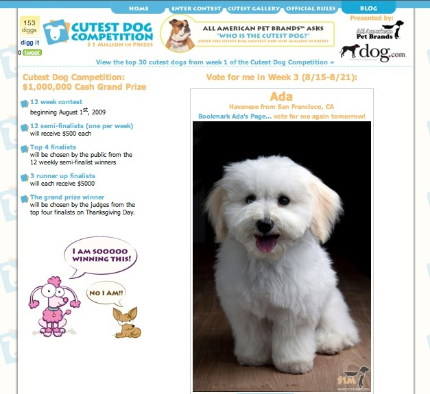 Ada's page in the Cutest Dog Competition
